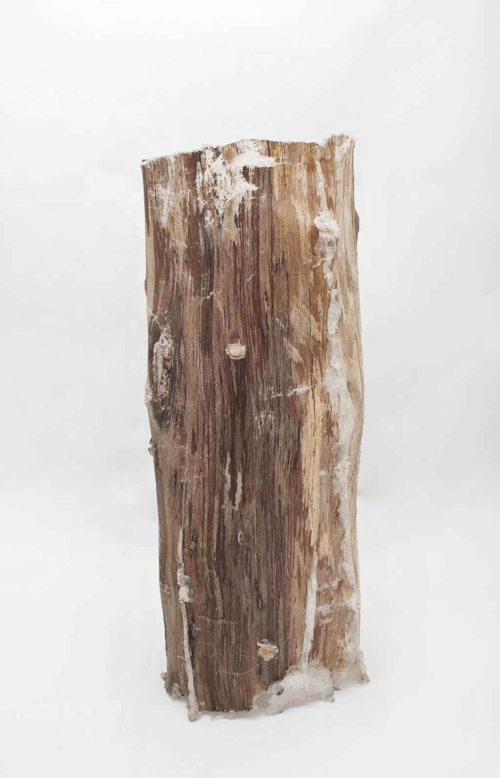 log lights joshua freedman